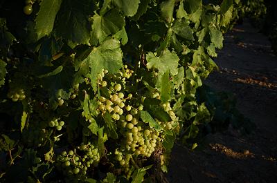 El meu blog de vins
